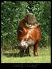 Nia Wolf: Camerupt, the false camel